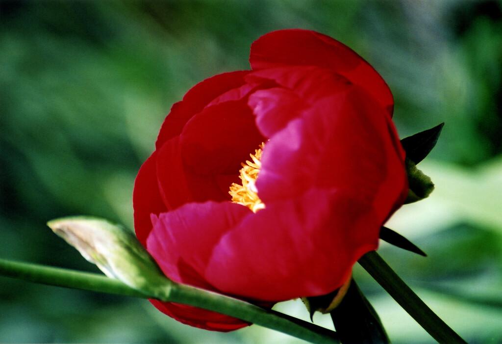 pflanze-012.jpg
