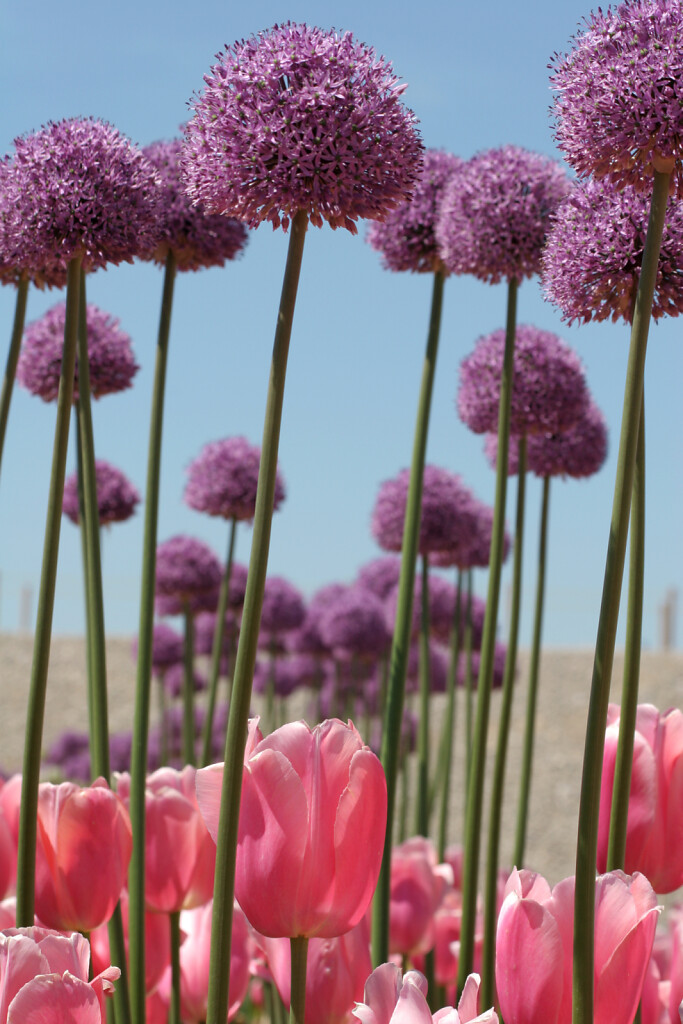pflanze-071.jpg