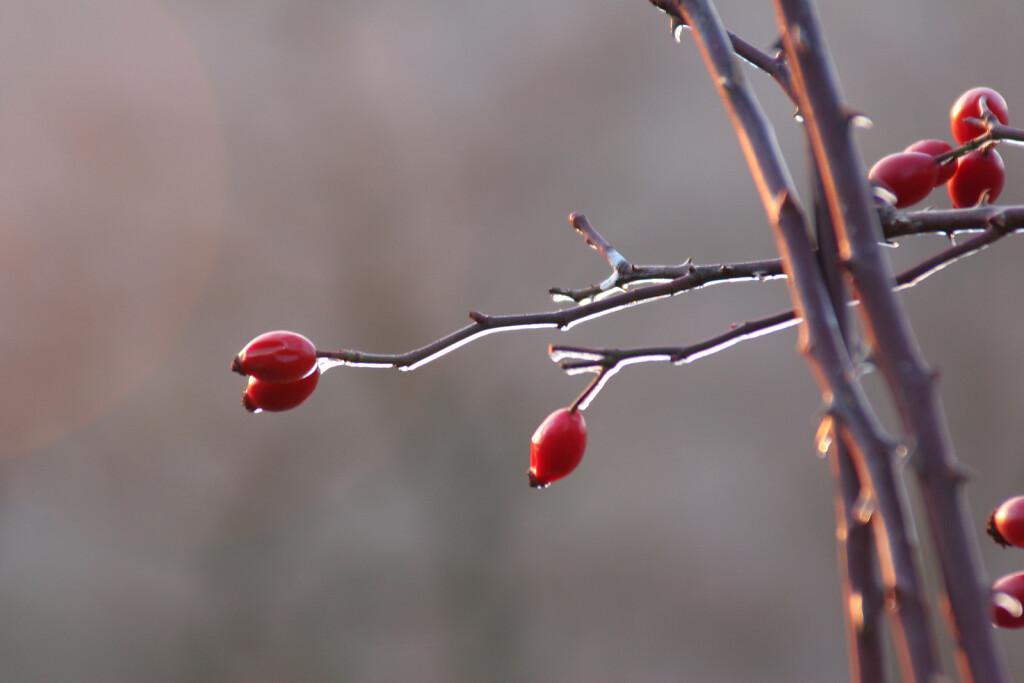 pflanze-176.jpg