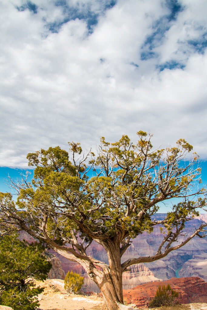 USA-2014-Grand-Canyon-4289.jpg