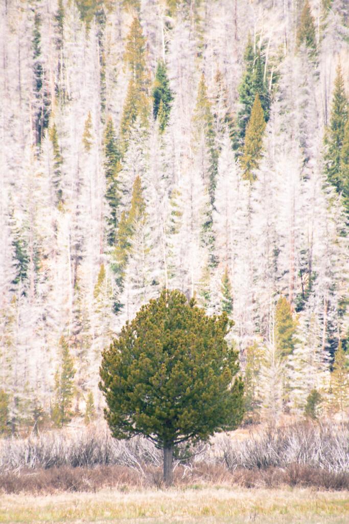 USA-2015-Rocky-Mountain-National-Park-7645.jpg